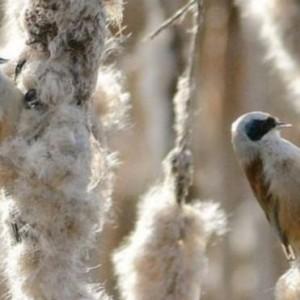 رصد طائر نادر في محمية غلوستر للحياة البرية