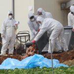 كوريا الجنوبية تستعين بالجيش على إنفلونزا الطيور