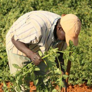 وزارة الزراعة بالحكومة المؤقتة تستورد 20 ألف طن من سماد اليوريا