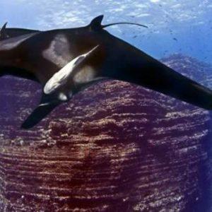 حديقة وطنية لحماية الحياة البحرية في المكسيك
