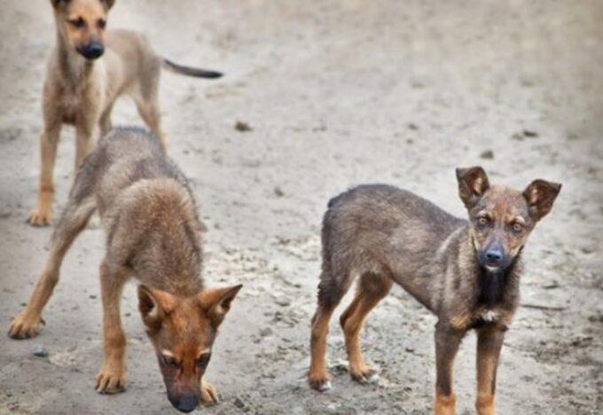 كلاب في الشارع