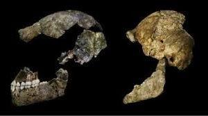 العُثُور على أسنان أقدم أسْلاف البشر في مُقاطعة دُورست (جنوب غرب إنجلترا)