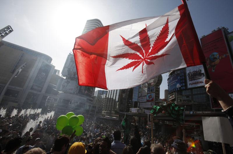 الماريجوانا في كندا