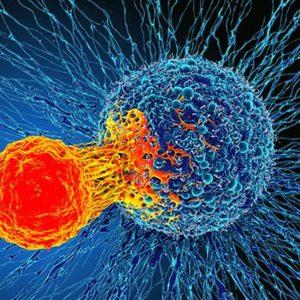 بعد رصد تكتيك مخادع.. باحثون يقترحون طرق للتغلب على «السرطان»