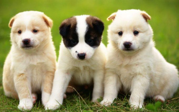 الزعيم الكوري «كيم جونغ» يُصادر الكلاب الأليفة في بلاده