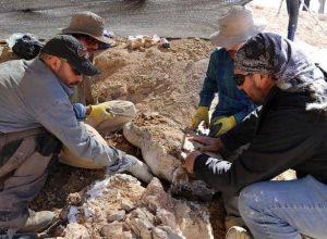 بقايا كائن حي بحري «مفترس» ظهر بعد 160 مليون عام