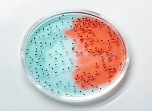 أول دليل بشأن الكائنات الحية التي تتغذى على «الفيروسات»