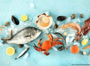 أصناف من «السمك» مُناسبة للأطفال تعرف عليها؟