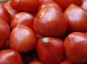 بسبب فيروس «فسيفساء بيبينو» روسيا تحظر استيراد طماطم من المغرب