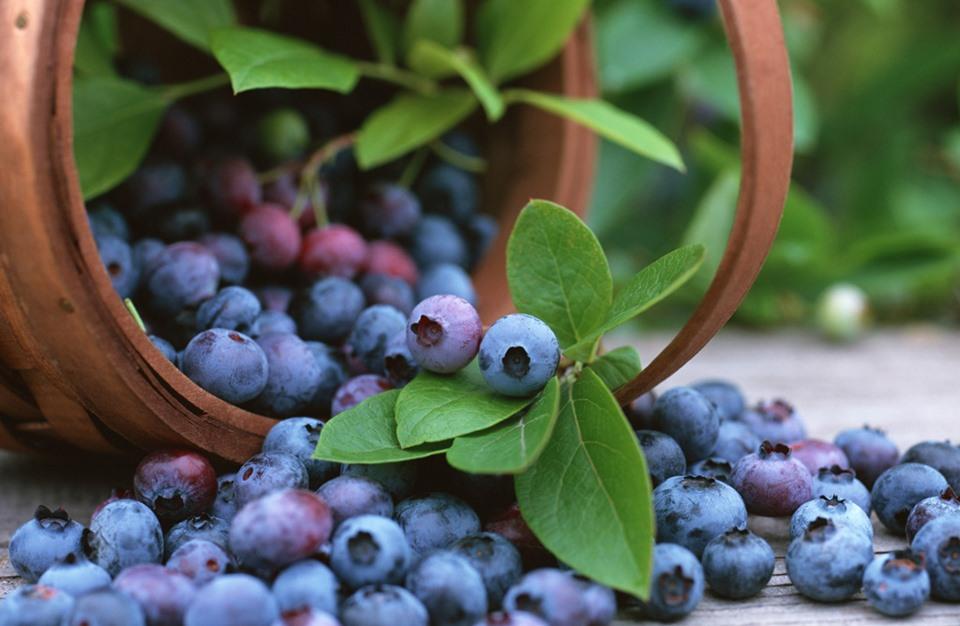 «فاكهة» تعمل على تخفيض السكر بالدم وتحسين الإنسولين