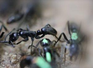 فيديو.. مواطن في سنغافورة يترك مهنته ويفتح متجرا لبيع «النمل»
