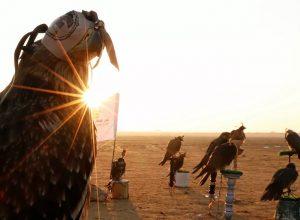 إنقاذ «صقور» مُهددة بالانقراض من بيعها للخليج.. قيمتها مليون دولار