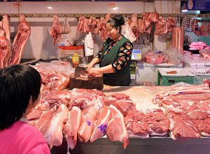 من عائلة كورونا.. فيروس جديد ينتقل عبر الخنازير