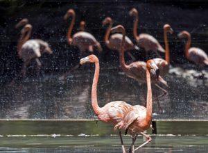 مجزرة في لبنان والضحية طيور «الفلامينغو» المُهاجرة